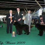 Winner 2009 Beste Puppy