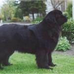Lady-mei-2002