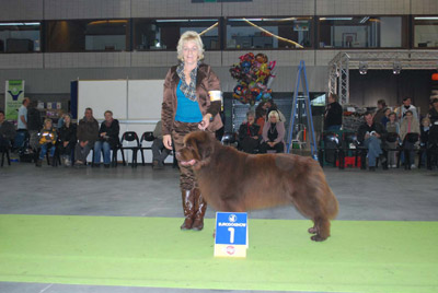 15-11-2008Kortrijk1 Uitmuntend Kampioensklasse CAC, CACIBMevr. K. Butenhoff-Taufertshöfer (D)